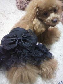 愛犬鈴ちゃん~トイプードル☆ライフスタイル~-2012030417360000.jpg