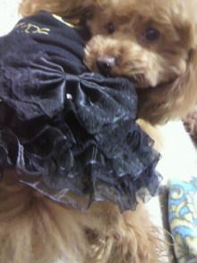 愛犬鈴ちゃん~トイプードル☆ライフスタイル~-2012030417420001.jpg