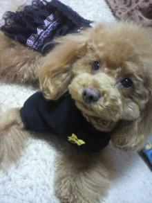 愛犬鈴ちゃん~トイプードル☆ライフスタイル~-2012030417400001.jpg