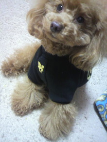 愛犬鈴ちゃん~トイプードル☆ライフスタイル~-2012030417430001.jpg
