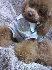 愛犬鈴ちゃん~トイプードル☆ライフスタイル~-2012030900470000.jpg