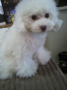 愛犬鈴ちゃん~トイプードル☆ライフスタイル~-2012031017000002.jpg