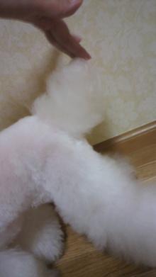 愛犬鈴ちゃん~トイプードル☆ライフスタイル~-2012031018280001.jpg