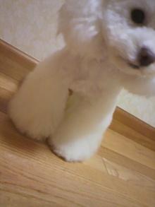 愛犬鈴ちゃん~トイプードル☆ライフスタイル~-2012031018290000.jpg