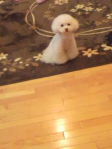 愛犬鈴ちゃん~トイプードル☆ライフスタイル~-2012031018490000.jpg