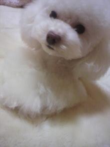 愛犬鈴ちゃん~トイプードル☆ライフスタイル~-2012031018300001.jpg