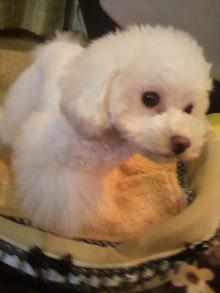 愛犬鈴ちゃん~トイプードル☆ライフスタイル~-2012031319410000.jpg