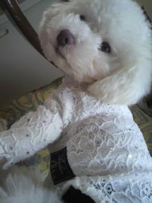 愛犬鈴ちゃん~トイプードル☆ライフスタイル~-2012031413190000.jpg