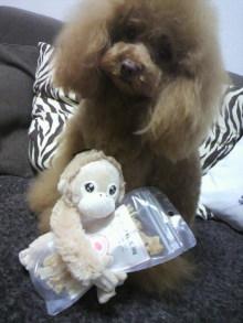 愛犬鈴ちゃん~トイプードル☆ライフスタイル~-2012031715380000.jpg