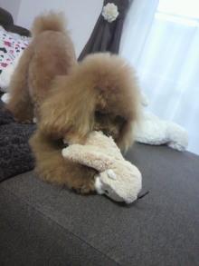 愛犬鈴ちゃん~トイプードル☆ライフスタイル~-2012031715410001.jpg