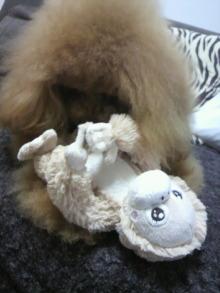 愛犬鈴ちゃん~トイプードル☆ライフスタイル~-2012031715410000.jpg