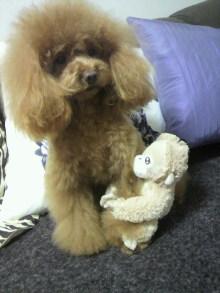 愛犬鈴ちゃん~トイプードル☆ライフスタイル~-2012031715400002.jpg