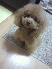 愛犬鈴ちゃん~トイプードル☆ライフスタイル~-2012031715420001.jpg