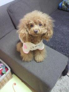 愛犬鈴ちゃん~トイプードル☆ライフスタイル~-2012032019540001.jpg