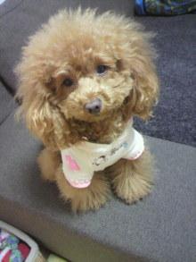 愛犬鈴ちゃん~トイプードル☆ライフスタイル~-2012032019540002.jpg