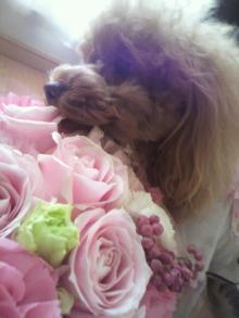 愛犬鈴ちゃん~トイプードル☆ライフスタイル~-2012032016010002.jpg