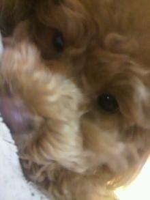 愛犬鈴ちゃん~トイプードル☆ライフスタイル~-2012032119190000.jpg