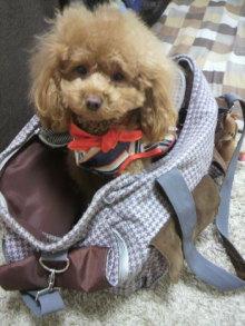 愛犬鈴ちゃん~トイプードル☆ライフスタイル~-2012032211310000.jpg