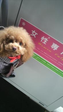 愛犬鈴ちゃん~トイプードル☆ライフスタイル~-2012032211540000.jpg