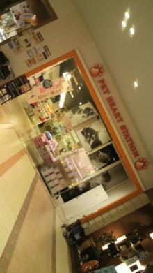 愛犬鈴ちゃん~トイプードル☆ライフスタイル~-2012030719390000.jpg
