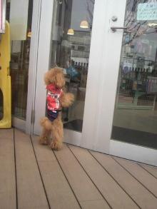 愛犬鈴ちゃん~トイプードル☆ライフスタイル~-2012032212320000.jpg