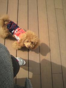 愛犬鈴ちゃん~トイプードル☆ライフスタイル~-2012032212340000.jpg