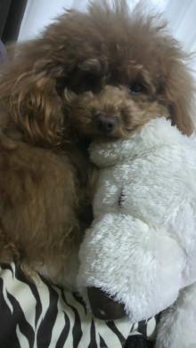 愛犬鈴ちゃん~トイプードル☆ライフスタイル~-2012032214550000.jpg