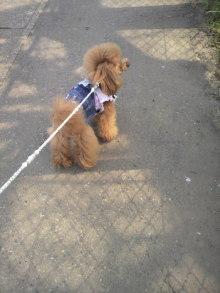 愛犬鈴ちゃん~トイプードル☆ライフスタイル~-2012032813350000.jpg