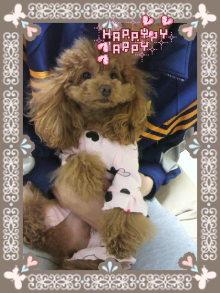 愛犬鈴ちゃん~トイプードル☆ライフスタイル~-2012032900040000.jpg