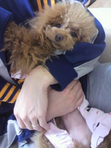 愛犬鈴ちゃん~トイプードル☆ライフスタイル~-2012032900040001.jpg