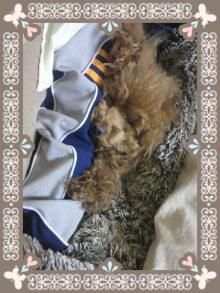 愛犬鈴ちゃん~トイプードル☆ライフスタイル~-2012032900140001.jpg