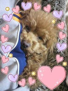 愛犬鈴ちゃん~トイプードル☆ライフスタイル~-2012032900140000.jpg