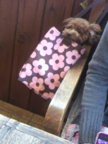 愛犬鈴ちゃん~トイプードル☆ライフスタイル~-2012040117280001.jpg