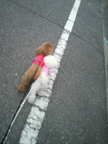 愛犬鈴ちゃん~トイプードル☆ライフスタイル~-2012040311460000.jpg