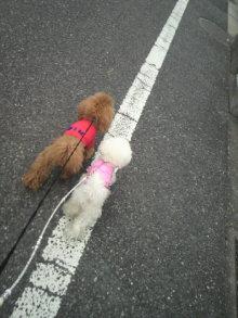 愛犬鈴ちゃん~トイプードル☆ライフスタイル~-2012040311460001.jpg