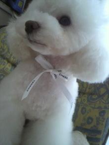 愛犬鈴ちゃん~トイプードル☆ライフスタイル~-2012040314240001.jpg