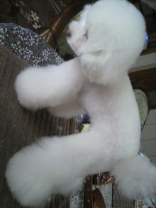 愛犬鈴ちゃん~トイプードル☆ライフスタイル~-2012040314200000.jpg