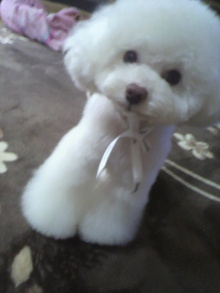 愛犬鈴ちゃん~トイプードル☆ライフスタイル~-2012040314260001.jpg