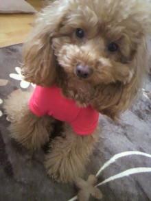 愛犬鈴ちゃん~トイプードル☆ライフスタイル~-2012040311520001.jpg
