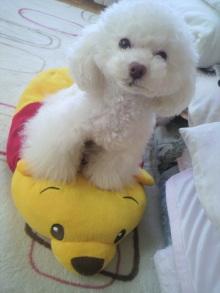 愛犬鈴ちゃん~トイプードル☆ライフスタイル~-2012040410510000.jpg