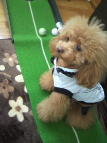 愛犬鈴ちゃん~トイプードル☆ライフスタイル~-2012040412120000.jpg