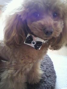 愛犬鈴ちゃん~トイプードル☆ライフスタイル~-2012040513130000.jpg