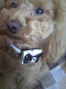 愛犬鈴ちゃん~トイプードル☆ライフスタイル~-2012040513140001.jpg