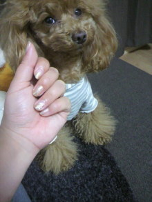 愛犬鈴ちゃん~トイプードル☆ライフスタイル~-2012040520160000.jpg