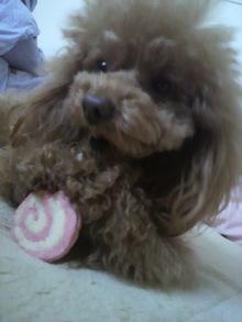 愛犬鈴ちゃん~トイプードル☆ライフスタイル~-2012040616270000.jpg