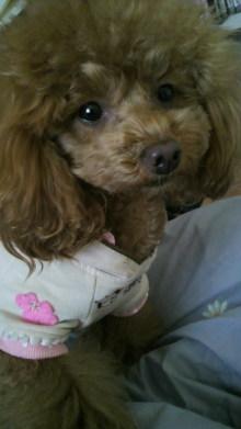 愛犬鈴ちゃん~トイプードル☆ライフスタイル~-2012040616420000.jpg