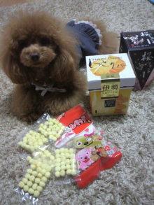 愛犬鈴ちゃん~トイプードル☆ライフスタイル~-2012041217460000.jpg
