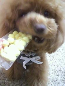 愛犬鈴ちゃん~トイプードル☆ライフスタイル~-2012041217470000.jpg