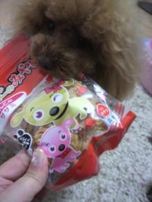 愛犬鈴ちゃん~トイプードル☆ライフスタイル~-2012041217470002.jpg