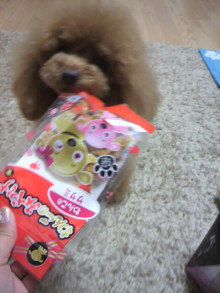 愛犬鈴ちゃん~トイプードル☆ライフスタイル~-2012041217480002.jpg